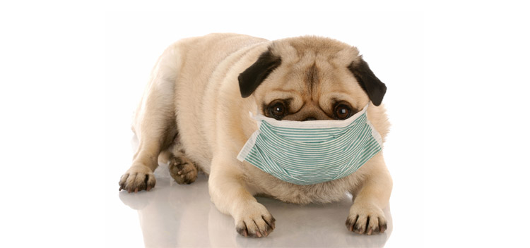 For pets with contagious diseases