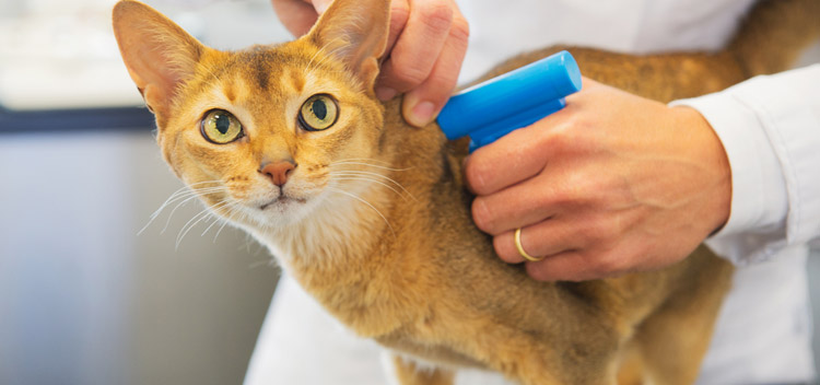 Microchipping for pets in Dorset