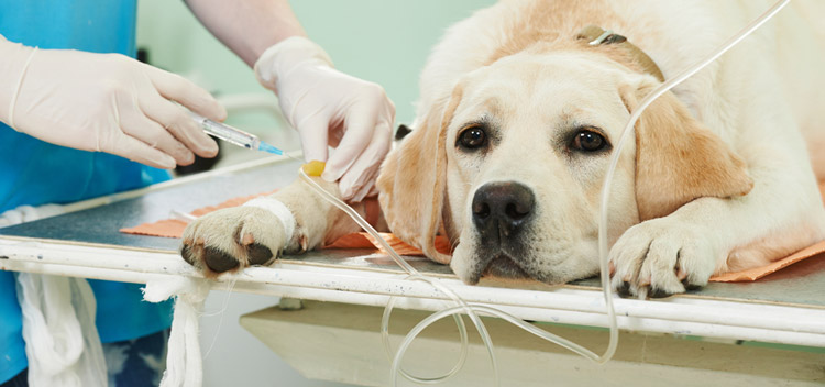 Expert surgical care for pets in Christchurch