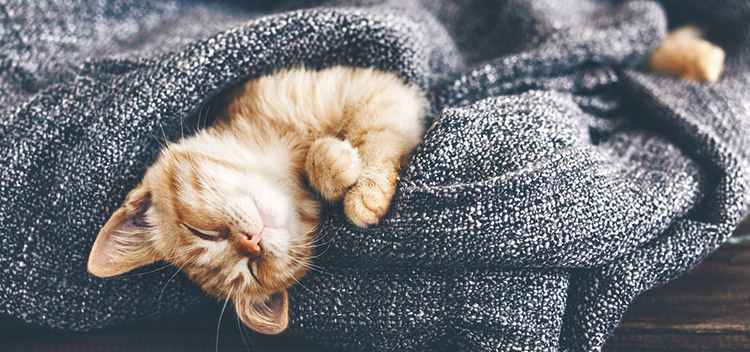 Keeping cats safer in winter