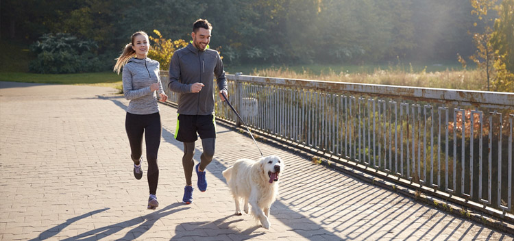 Get fit with your dog in Christchurch