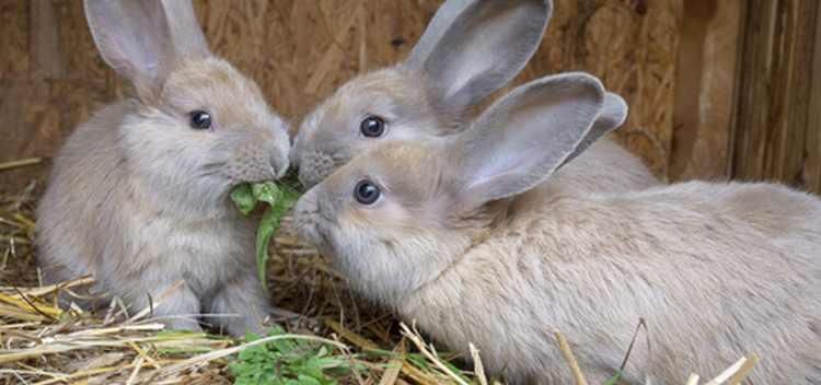 Helping your rabbit lose weight in Christchurch