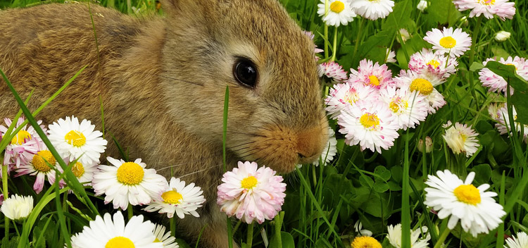 Keep your rabbit safe outdoors in Christchurch