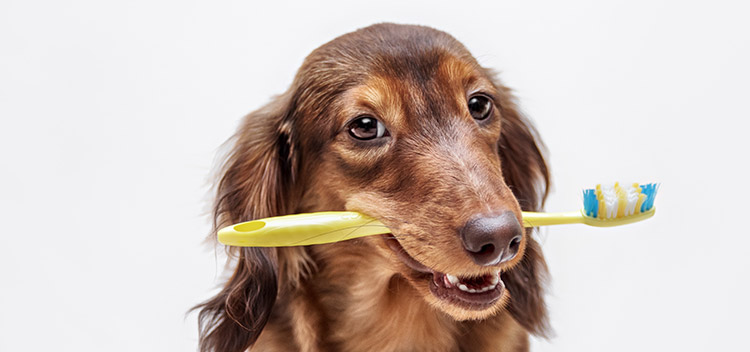 Find out what's normal for your dog's teeth