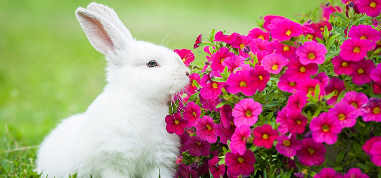 Protect your rabbit this summer with Best Friends Vets