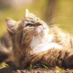 Protect your cat from overheating