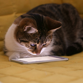 Five cat-tastic apps