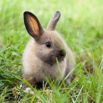Warning signs of rabbit illness from Best Friends Vets