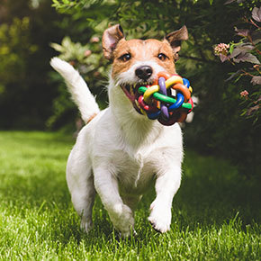 Pep up your pooch with play tips from Best Friends
