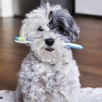 Dental advice for dogs from Best Friends