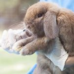 Spring safety tips for bunnies