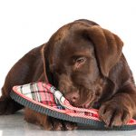 How to prevent chewing in dogs
