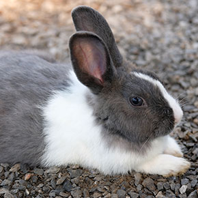 Rabbits kept alone are at high risk of loneliness