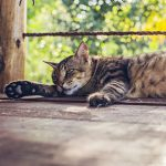 Cats and heat stroke advice from Best Friends