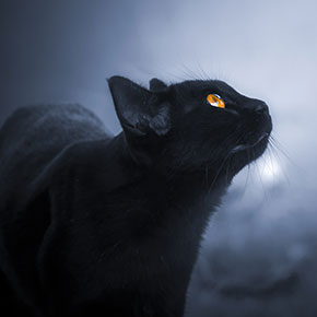 Dark night safety for cats