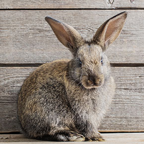Protect your rabbit from fireworks noise in Dorset