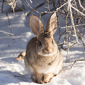 Winter care tips for rabbits in Dorset