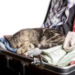 Holiday tips for cats