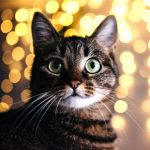Our top three cat Christmas presents