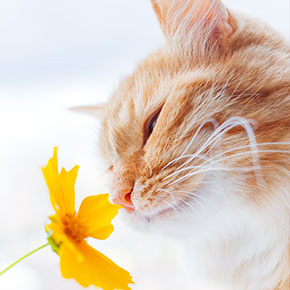 Easing your cat's hay fever in Christchurch