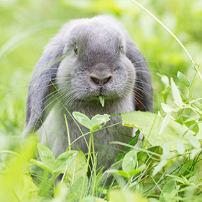 A dental check could be a lifesaver for your rabbit