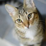 Find out how to prevent dental problems in cats