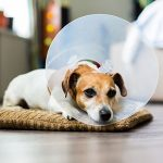 Dog neutering advice from Best Friends Vets