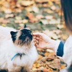 Treat your cat well in Christchurch