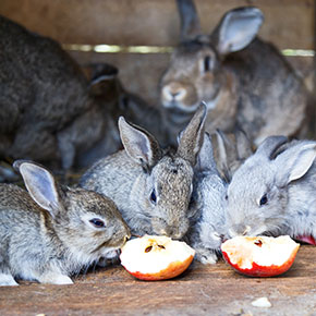 Perfect picks for rabbit treats in Dorset