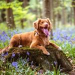 Get your dog up to speed with technology
