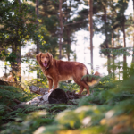 Best Friends' summer safety tips for dogs