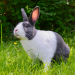 Best Friends' summer safety tips for rabbits