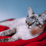 Get our cat travel 21 tip tick list