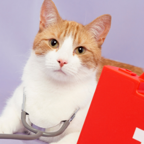 Learn what to do in a cat health emergency with Best Friends Vets.