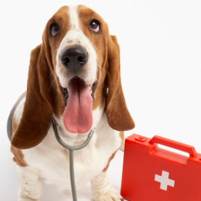 Head vet Stefan explains how to recognise 7 conditions that require first aid for dogs.
