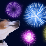 Prepare your pet in time for fireworks night with advice from our head vet Stefan Radermacher.
