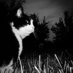 Best Friends Vets has some dark night safety advice for cat owners.