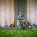 Advice on noisy fireworks and rabbit behaviour from Best Friends Vets.
