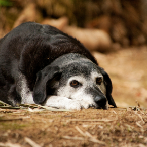 Stefan Radermacher recommends 5 things to look out for in older dogs