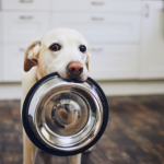 Stefan Radermacher has this advice on how to feed your dog
