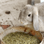 Stefan Radermacher warns about 21 foods not to feed your rabbit