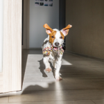 A new dog owners' guide to responsible petcare in Christchurch