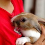 Best Friends on why pet rabbits are beneficial to mental health