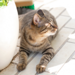 8 summer dangers cats owners in Dorset need to know about