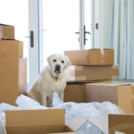 Prepare your dog for moving house