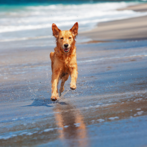 Read Best Friends' tips and help your dog get over a stressful summer