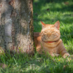 Stefan Radermacher recommends ways to cool cats down in summer
