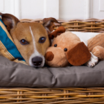 Best Friends' tips on reducing separation anxiety in dogs