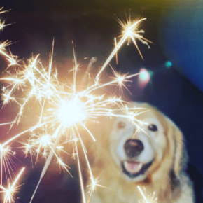 Best Friends' explain how to desensitise your dog to fireworks
