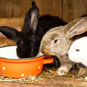 Let's make Christchurch a happier place for rabbits and other small pets this 'fireworks season'